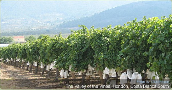 Hondon Valley of the Vines