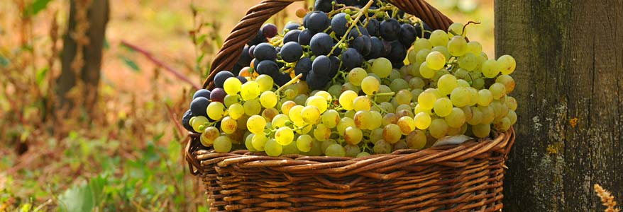 HV Basket Of Hondon Grapes