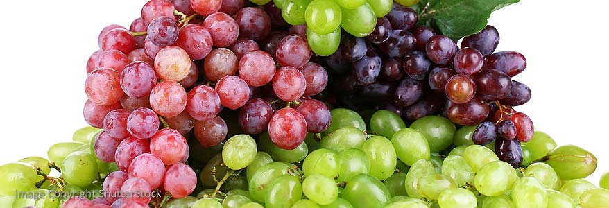 Grapes and More Grapes